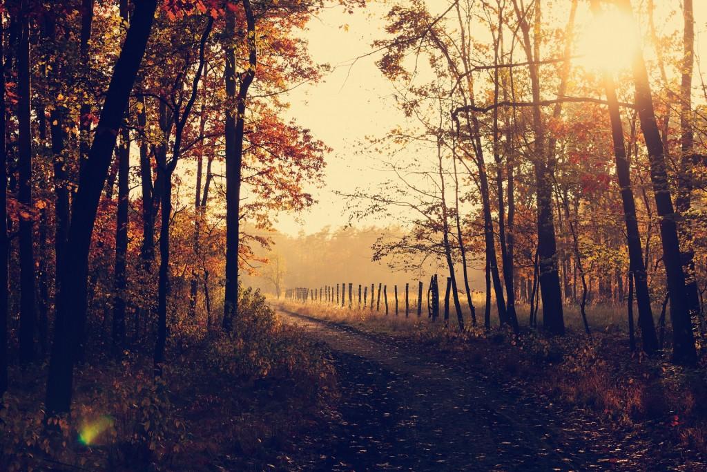 woodland-1031154_1920